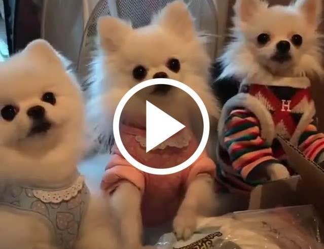 Cute Dogs thumbnail