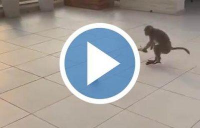funny monkey video thumbnail