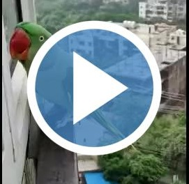 funny parrot thumbnail