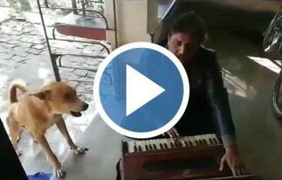 singing funny dog thumbnail